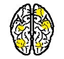 cerebro-02